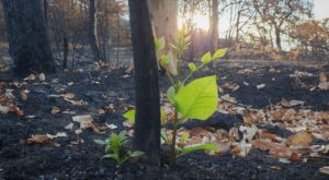 New Growth in Bearcreek Greenway